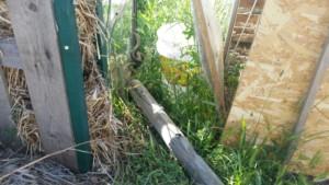 Une petite couleuvre est entortillée près de la porte d'une des serres