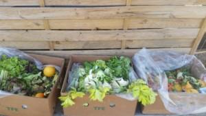 Un carton plein de salades et céleris prêts à être mangés