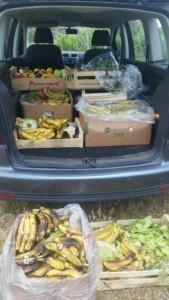 Un coffre de voiture plein de cartons de bananes