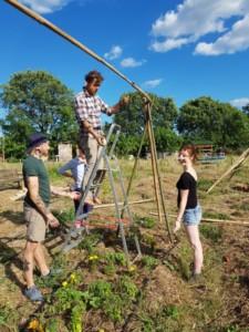Trois personnes s'occupent de fixer à l'aide de ficelle les plants de haricots et de tomate à un grand trépied en bambou
