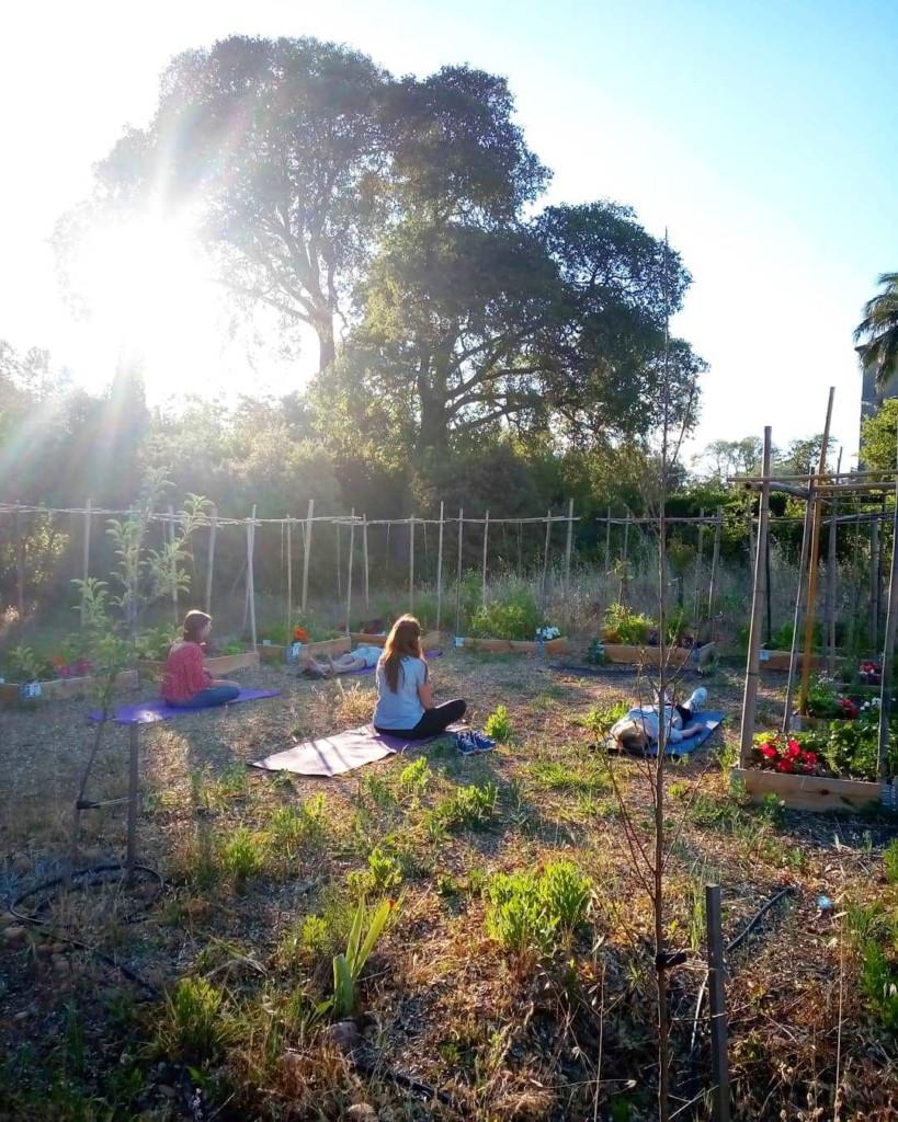 Quatre personnes en pleine séance de sophrologie, au sein du jardin, au soleil couchant.