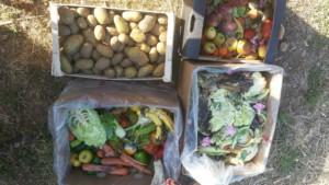Quatre cagettes de fruits et légumes récupérés des invendus d'un magasin bio