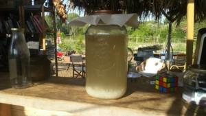 Grand bocal de kéfir en train de fermenter