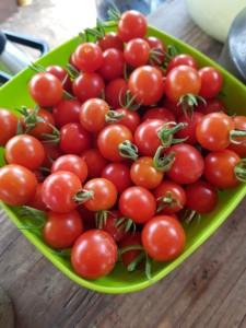 Bol plein de belles tomates cerises bien rondes et rouges, prêtes à être dégustées
