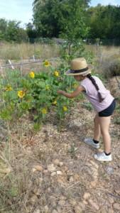 Petite fille de dos qui admire les petits tournesols