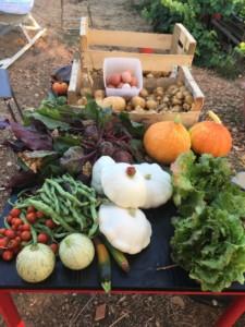 Une table couverte de légumes fraîchement cueillis. Courges, pommes de terre, tomates, salades, fèves, etc.