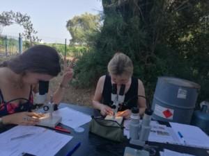 Deux femmes sont en train d'observer dans des loupes binoculaires pour identifier et dénombrer la faune de l'Oasis