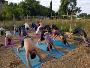 Une quinzaine de personnes en train de faire du Yoga. Ils et elles ont les pieds et mains au sol et les fesses levées en l'air.