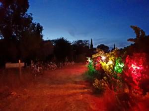 Chemin d'accès de l'Oasis bordé par des vignes dans lesquelles de ampoules de couleur créent un effet surréel.