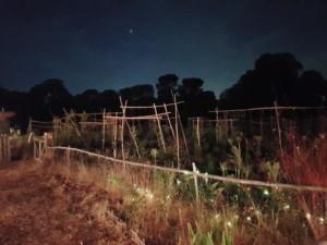 Le jardin est plongé dans l'obscurité. Seule la lumière de la paillote éclaire les premiers rangs de culture.