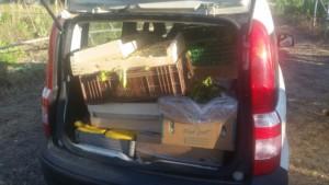 Coffre de voiture plein de cagettes de légumes issus du glanage.