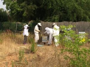 Quatre personnes en tenue de protection en train d'ouvrir une des ruches.