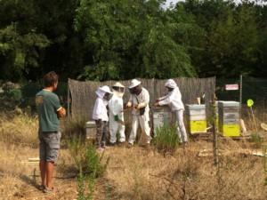 Quatre personnes en tenue de protection en train d'observer le contenu d'une ruche.