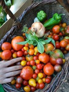 Gros plan sur le panier de légumes, ses tomates, poivrons et piments.