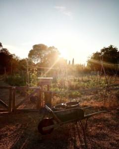 Prise de vue du jardin baigné dans un halo de lumière magnifique issu du soleil couchant.
