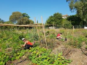 Vue d'ensemble du jardin dans lequel travaillent les participants à la formation