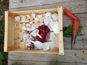 Plantoir en métal posé près d'une cagette pleine de sachets d'ails en tous genres
