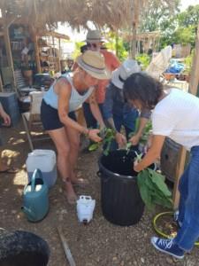 Deux personnes en train de jeter des plantes dans une grande poubelle noire pour préparer un purin