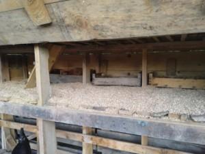 Intérieur du poulailler dont le sol est couvert de copeaux