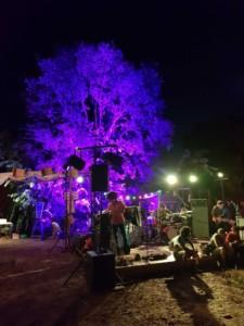 Personnes en train de préparer la scène pour le concert. En arrière plan, un arbre est entièrement éclairé en violet, donnant un aspect irréel à la scène.