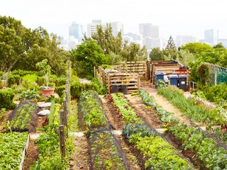 article-agriculture-urbaine-1200x769